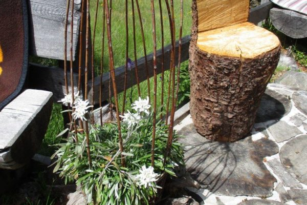 Edelweiss Natur In die Mahder Relax  Sommer
