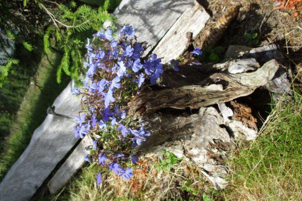 Blumen Holz Sommer In die Mahder Natur