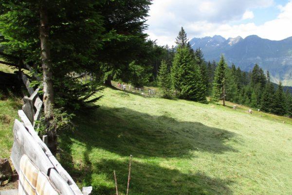Bergwiese In die Mahder Natur  Idylle Sommer Wandern